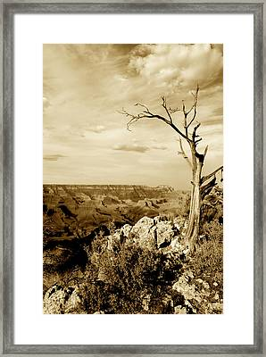 Grand Canyon Sepia Framed Print by T C Brown
