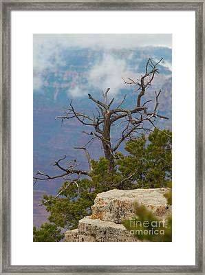 Framed Print featuring the photograph Grand Canyon Tree by Rod Wiens