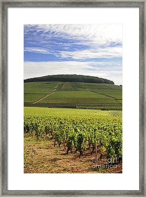 Grand Cru And Premier Cru Vineyards Of Aloxe Corton. Cote De Beaune. Burgundy. France. Europe. Framed Print by Bernard Jaubert