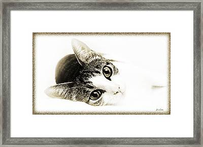 Grand Kitty Cuteness 3 High Key Framed Print by Andee Design