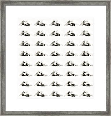 Grand Kitty Cuteness Bw 40 Framed Print