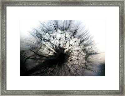 Framed Print featuring the photograph Grand Mountain Dandelion 2 by Kevin Bone