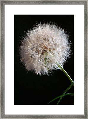 Framed Print featuring the photograph Grand Mountain Dandelion by Kevin Bone