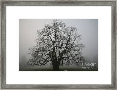 Grand Oak Tree Framed Print by Rich Collins