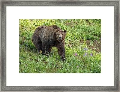 Grand Old Man Framed Print by Sandy Sisti