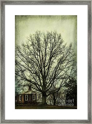 Grand Old Tree Framed Print