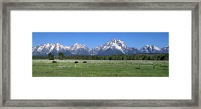Grand Teton Buffalo Framed Print by Brian Harig