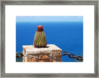 Grand Turk Cactus Framed Print