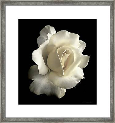 Grandeur Ivory Rose Flower Framed Print by Jennie Marie Schell