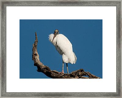 Grandfather Perched Framed Print by Linda Olsen