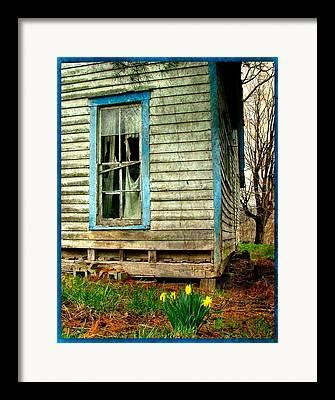 Daffodyls Framed Prints