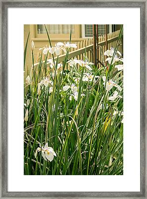 Grandpa's Lilies Framed Print by Jan Davies