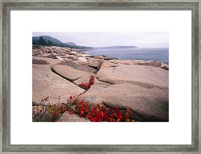 Granite Rocks Of Otter Point Acadia Natl Park Maine Framed Print by George Oze