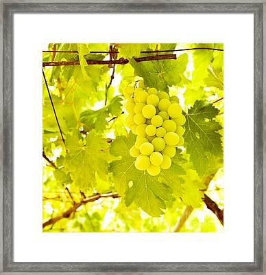 Grape Branch Framed Print by Anna Omelchenko