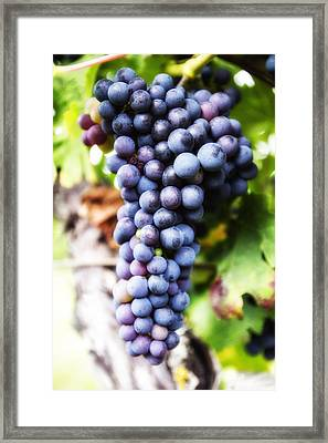 Grape Cluster Framed Print by Georgia Fowler