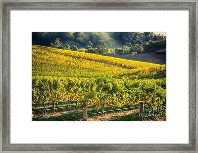 Grape Expectations Framed Print