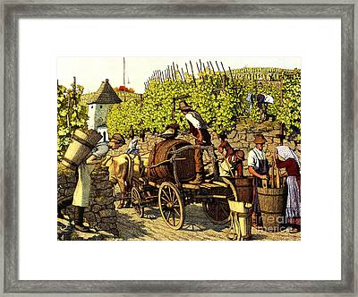 Grape Harvest 1890 Framed Print