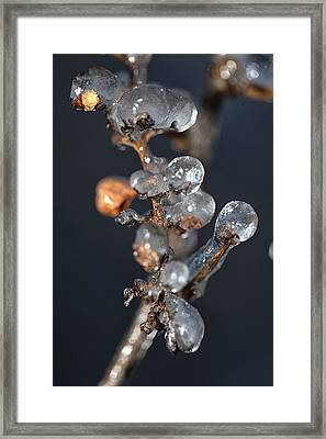 Grape Ice Framed Print