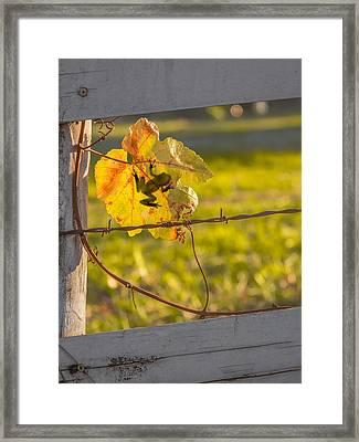 Grape Leaf Frog Framed Print