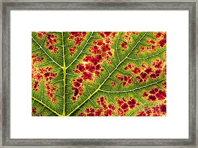 Grape Leaf Texture Framed Print