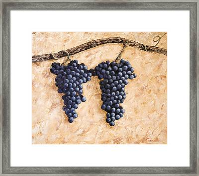 Grape Vine Framed Print by Darice Machel McGuire