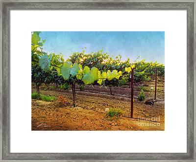 Grape Vine In The Vineyard Framed Print by Shari Warren