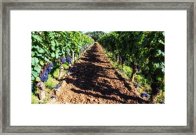Grape Vine Shadows  Framed Print by Georgia Fowler