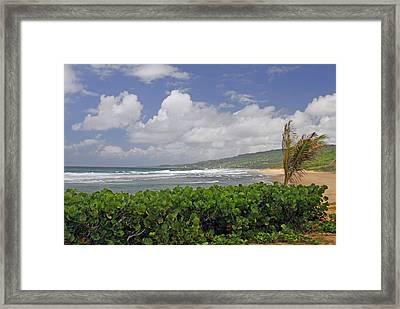Grape Vines And Barbados Beach Framed Print