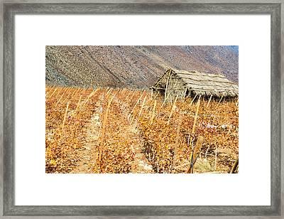 Grape Vines And Shack Framed Print by Jess Kraft