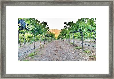 Grape Vines Framed Print