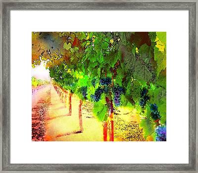 Grape Vines Framed Print by Cindy Edwards