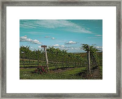 Grape Vines Framed Print by Jeff Swanson