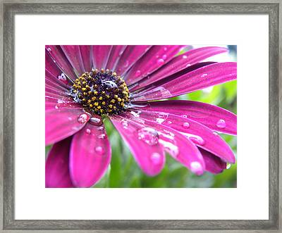 Grape Wine Framed Print by Julie Fields