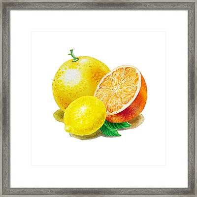 Grapefruit Lemon Orange Framed Print by Irina Sztukowski