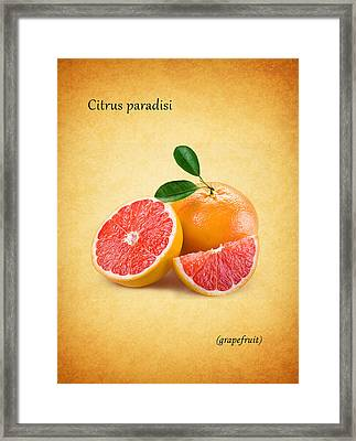 Grapefruit Framed Print by Mark Rogan