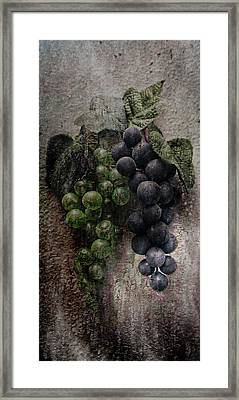 Off The Vine Framed Print by Aaron Berg