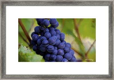 Grapes Framed Print by Alex King