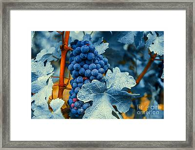 Grapes - Blue  Framed Print by Hannes Cmarits