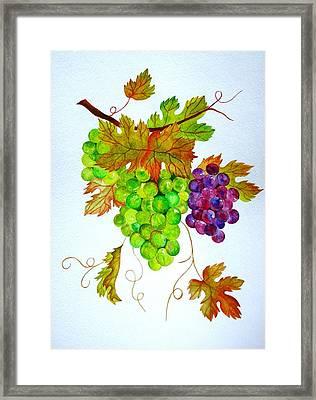 Grapes Framed Print by Elena Mahoney