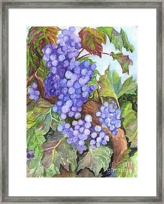 Grapes For The Harvest Framed Print by Carol Wisniewski