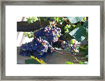 Framed Print featuring the photograph Grapes by George Mount