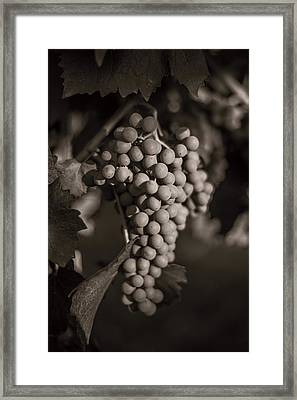 Grapes In Grey 2 Framed Print