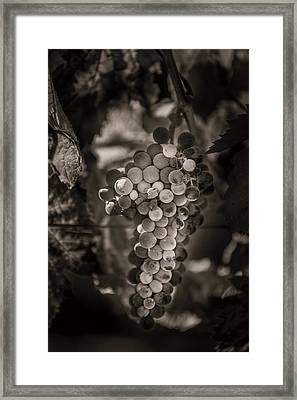 Grapes In Grey 3 Framed Print by Clint Brewer