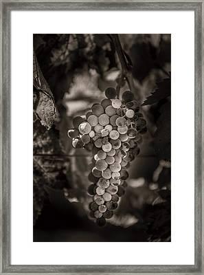 Grapes In Grey 3 Framed Print