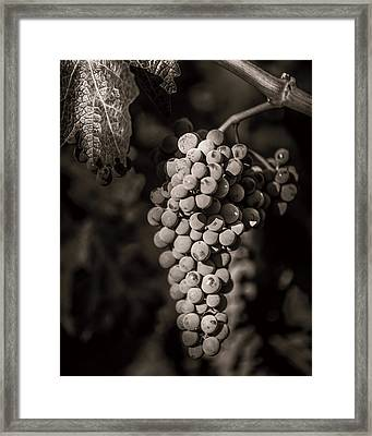 Grapes In Grey 4 Framed Print