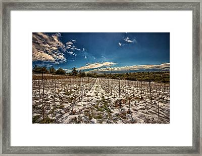 Grapes In Snow Framed Print