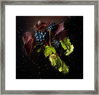 Grapes Framed Print by Ivan Vukelic