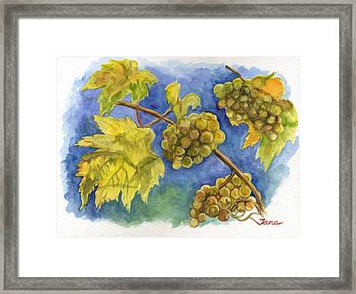 Grapes Framed Print by Jana Goode