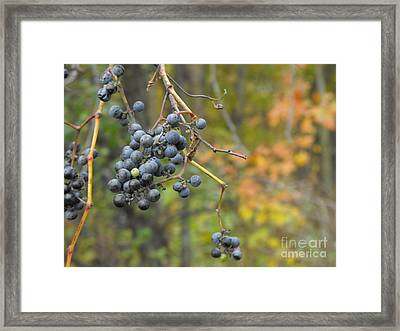 Grapes Left Framed Print by Erick Schmidt