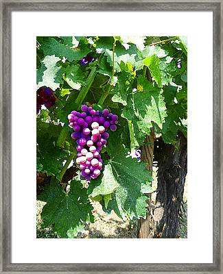 Grapes Of Tuscany Italian Winery  Framed Print by Irina Sztukowski